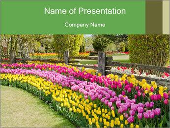 0000078653 PowerPoint Template - Slide 1