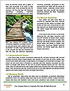 0000078708 Word Templates - Page 4