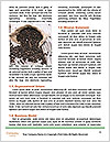 0000078754 Word Template - Page 4