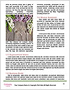 0000078779 Word Template - Page 4
