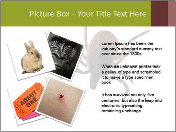 0000078809 PowerPoint Template - Slide 23