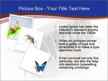 0000078829 PowerPoint Templates - Slide 17