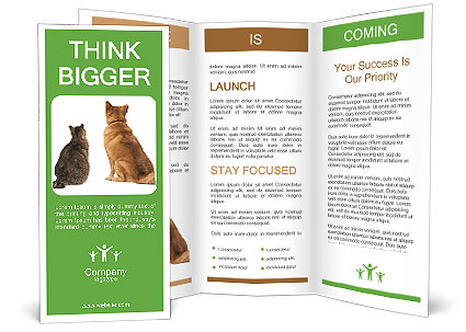 0000078923 Brochure Template