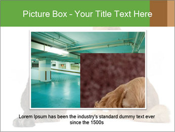 0000078923 PowerPoint Templates - Slide 15