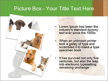0000078923 PowerPoint Templates - Slide 17