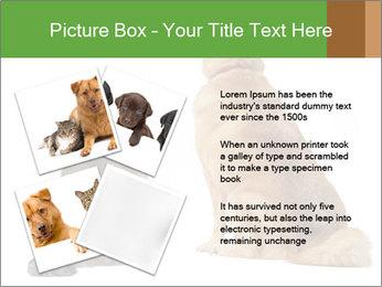 0000078923 PowerPoint Templates - Slide 23
