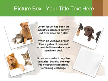 0000078923 PowerPoint Template - Slide 24