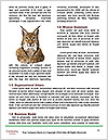 0000078938 Word Templates - Page 4