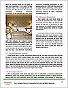 0000078990 Word Templates - Page 4