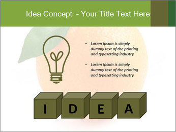 0000079062 PowerPoint Template - Slide 80