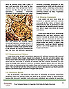 0000079090 Word Template - Page 4