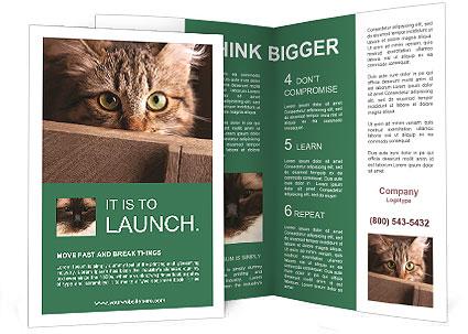 0000079099 Brochure Template