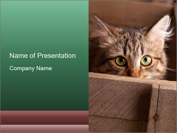 0000079099 PowerPoint Template - Slide 1
