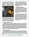 0000079099 Word Templates - Page 4