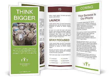 0000079131 Brochure Template