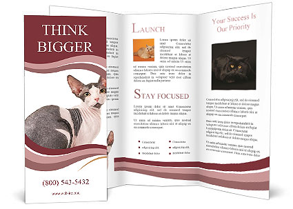 0000079171 Brochure Template