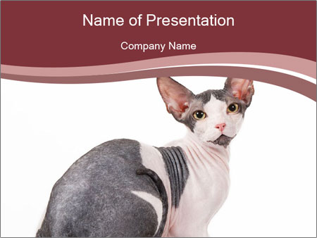 0000079171 PowerPoint Templates