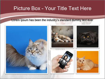 0000079171 PowerPoint Templates - Slide 19