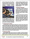 0000079181 Word Template - Page 4