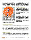 0000079216 Word Template - Page 4