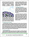 0000079217 Word Template - Page 4
