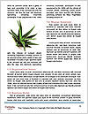 0000079245 Word Template - Page 4
