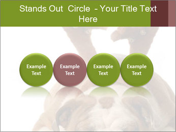 0000079269 PowerPoint Templates - Slide 76