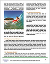 0000079285 Word Template - Page 4