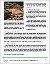 0000079296 Word Templates - Page 4