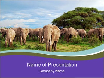 0000079303 PowerPoint Templates - Slide 1