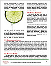 0000079304 Word Templates - Page 4