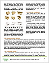0000079314 Word Template - Page 4