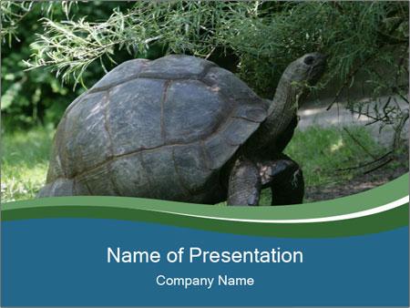 0000079350 PowerPoint Templates