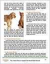 0000079379 Word Template - Page 4