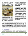 0000079380 Word Template - Page 4