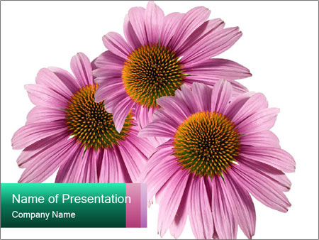 0000079466 PowerPoint Templates
