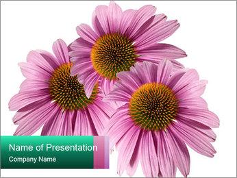0000079466 PowerPoint Template - Slide 1