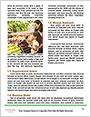 0000079508 Word Templates - Page 4