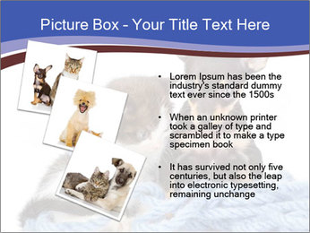0000079582 PowerPoint Templates - Slide 17