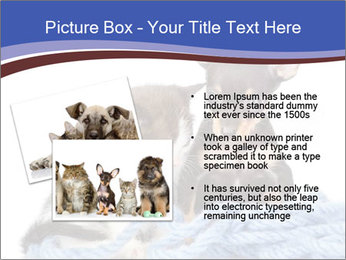 0000079582 PowerPoint Templates - Slide 20