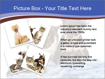 0000079582 PowerPoint Templates - Slide 23