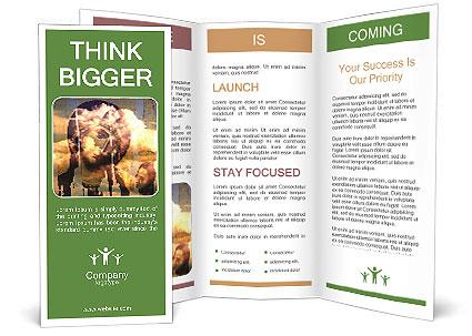 0000079603 Brochure Templates