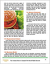 0000079617 Word Template - Page 4