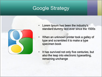 0000079653 PowerPoint Templates - Slide 10