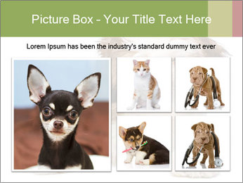 0000079702 PowerPoint Template - Slide 19