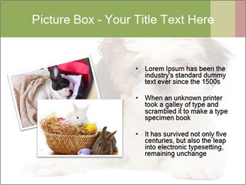 0000079702 PowerPoint Template - Slide 20
