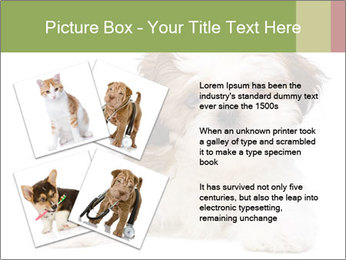 0000079702 PowerPoint Template - Slide 23