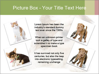 0000079702 PowerPoint Template - Slide 24