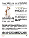 0000079702 Word Template - Page 4