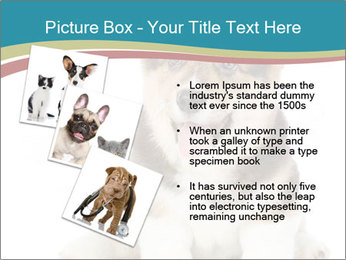 0000079704 PowerPoint Templates - Slide 17